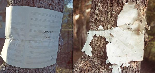 Tree_Music_sm.jpg