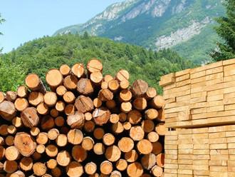 Правительство вводит с 1 июля новые пошлины на вывоз лесоматериалов
