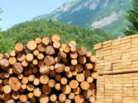 В России изменили понятие лесоматериалов