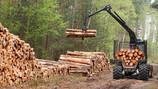 C 1 января 2022 г. изменяется регулирование экспорта из России отдельных видов необработанной и груб