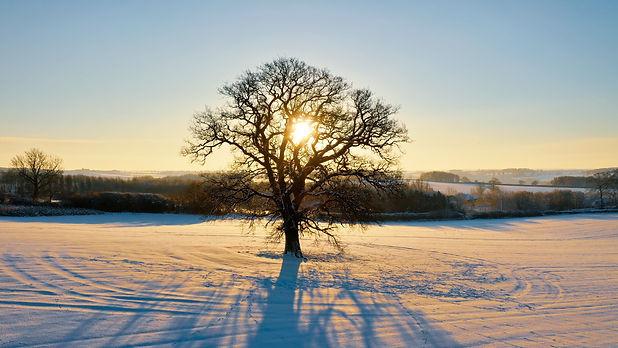 Winter Tree Solitude.jpg