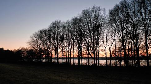 Silhouette Trees on Eyebrook Shore 1.jpg