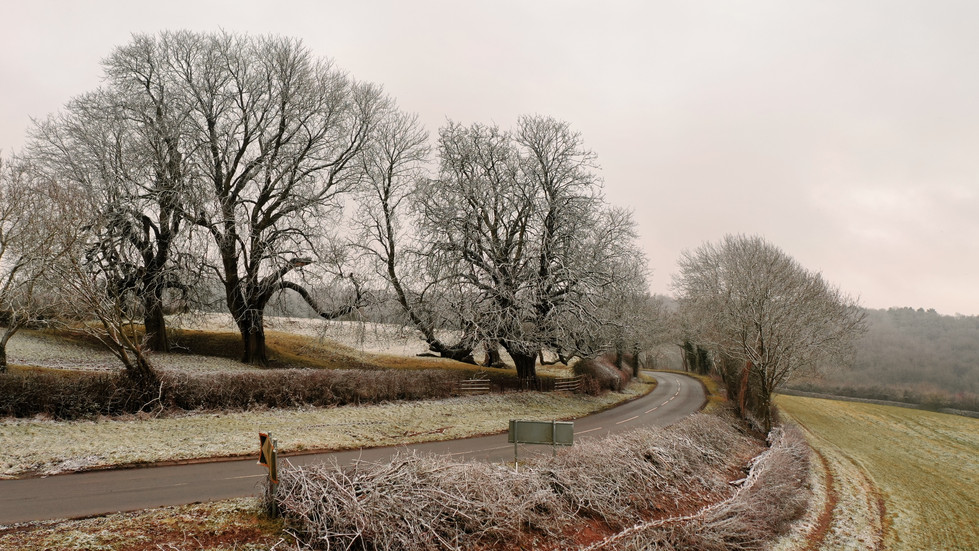 Frosted Trees on Stockerston Rd.JPG