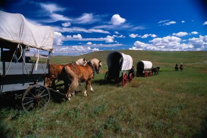 Covered Wagons Creak Across the Dakota Prairie