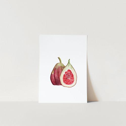 Postcard Fig