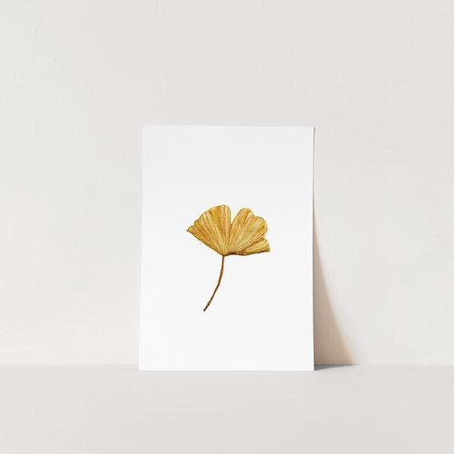 Postcard Ginko