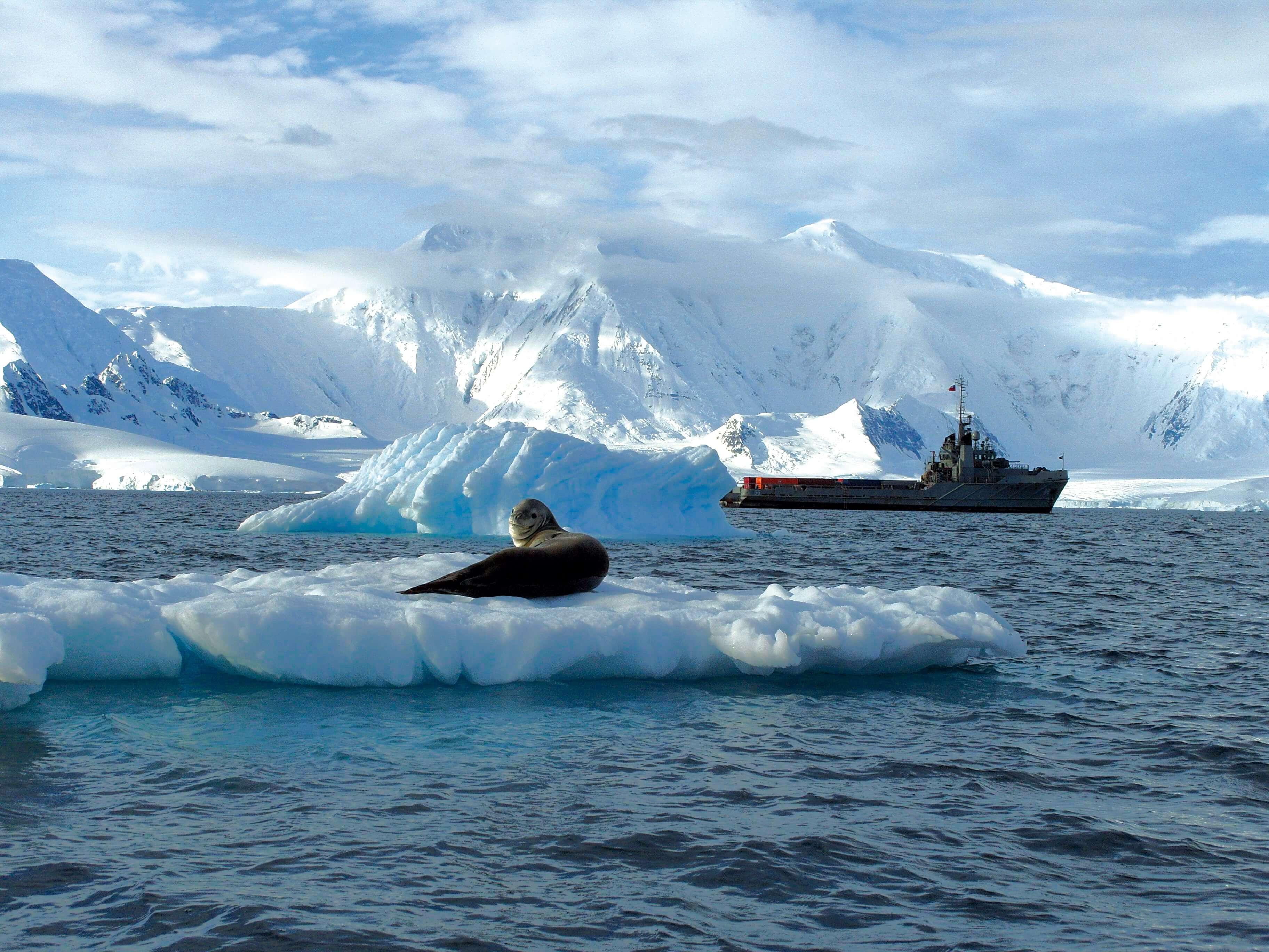 web_Antarctica