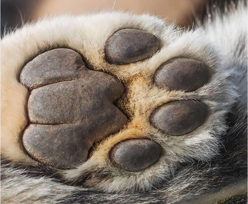 africa_web_paws