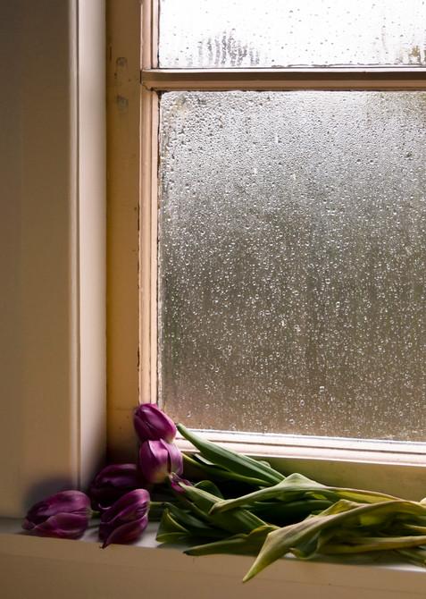 Tulips Upon Windowsill. 2020.