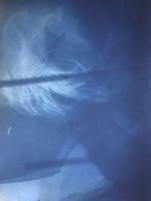 Self Portrait. Cyanotype, 2020