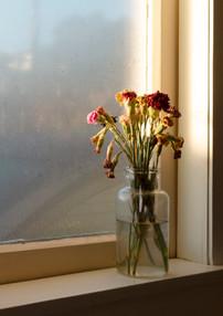 Carnations In Mason Jar. 2020.