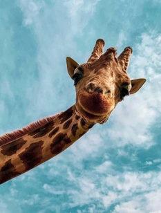 giraf_edited.jpg