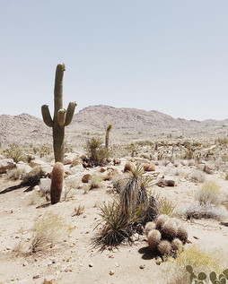 joshua tree, california - almost makes p