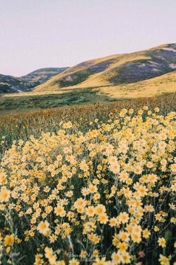 simple landscape photography….jpg