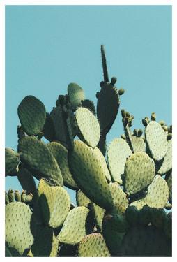 Large Modern Cactus Art Print, Extra Lar