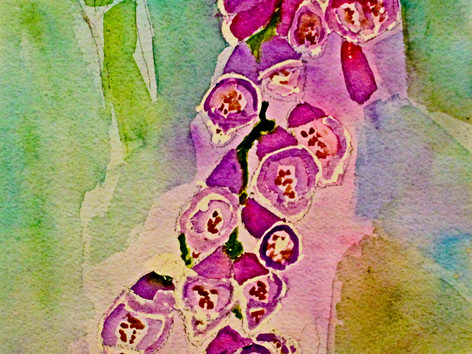 Foxgloves