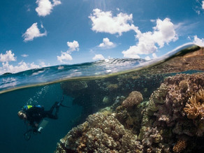 Scientists develop new model to identify coral reefs' survival factors