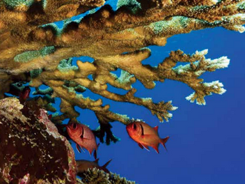 US Coral Reef Task Force holds virtual meeting