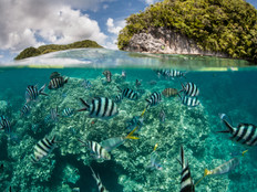Palau-Taiwan travel bubble begins amid a mixture of excitement and anxiety