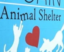 Animal Shelter to end services to GovGuam until debt is paid