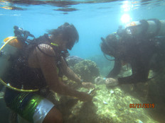Working group formed to review coral reef resiliency plan