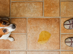 Why your pet is peeing in random spots