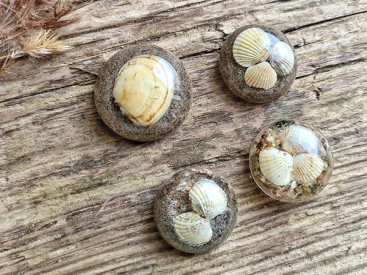 Strandgut Magnet Muscheln auf Kies & Sand