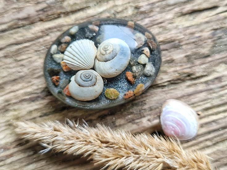 Strandgut Magnet Schneckenhäuser grau