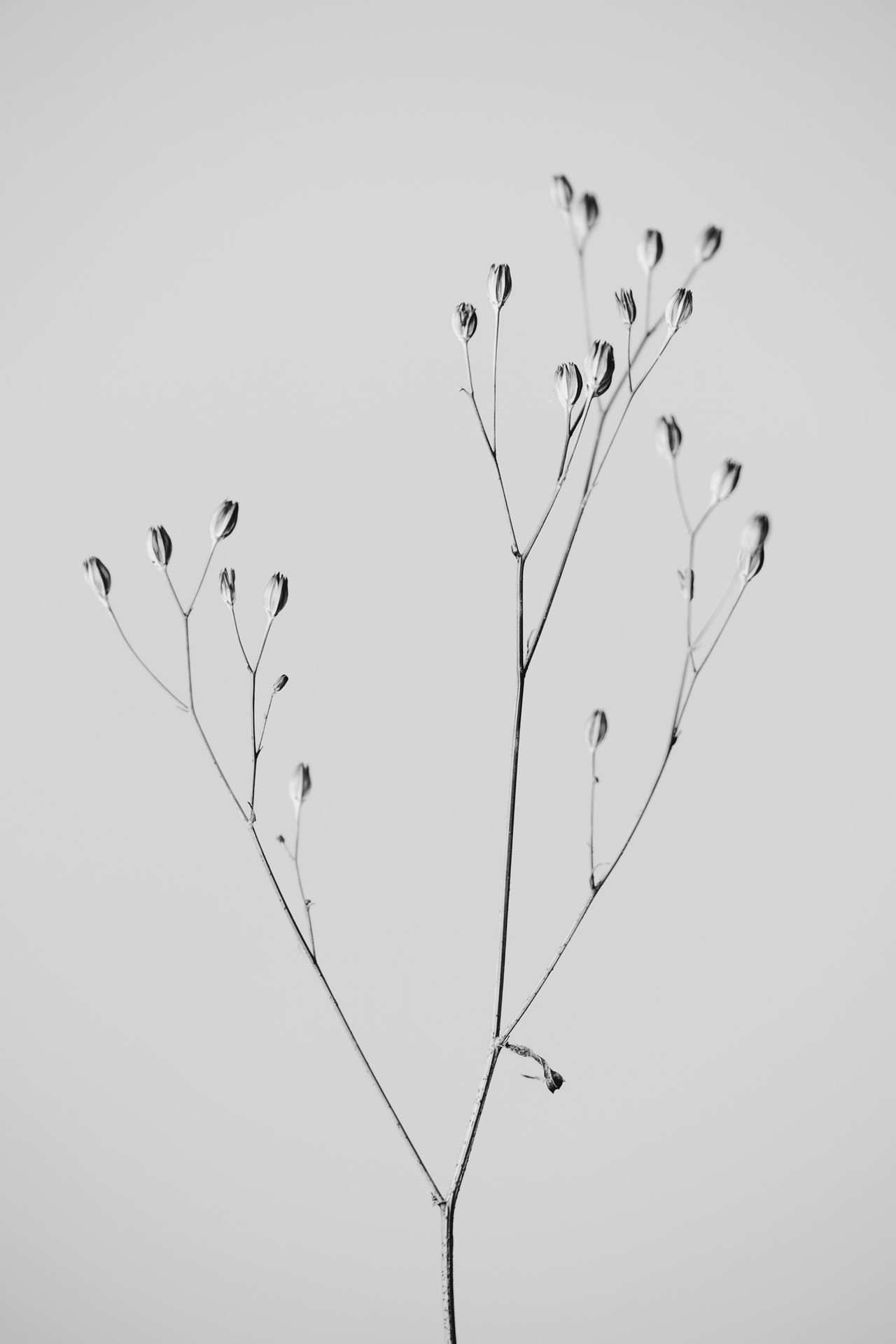Flora II #04