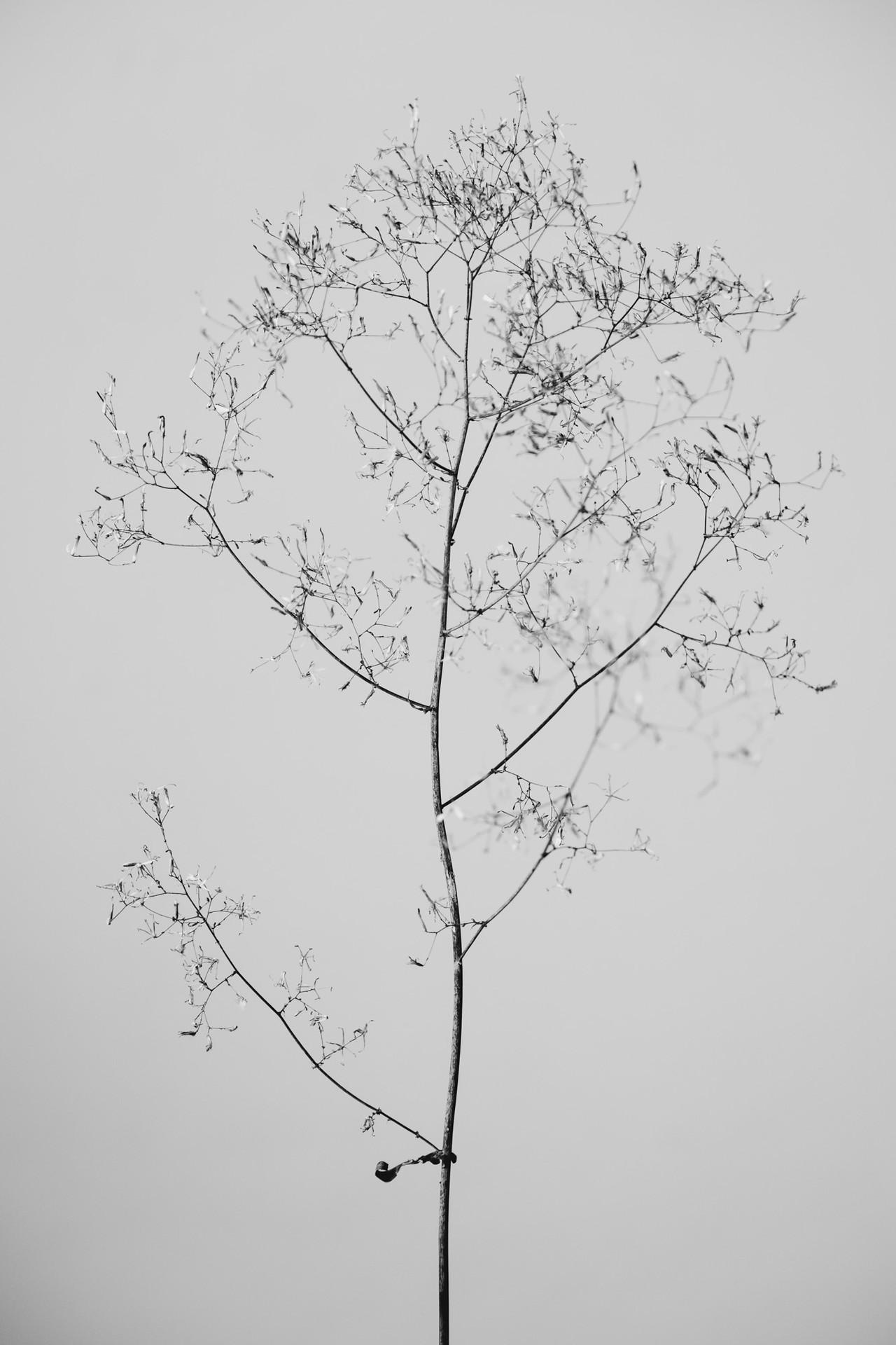 Flora II #03