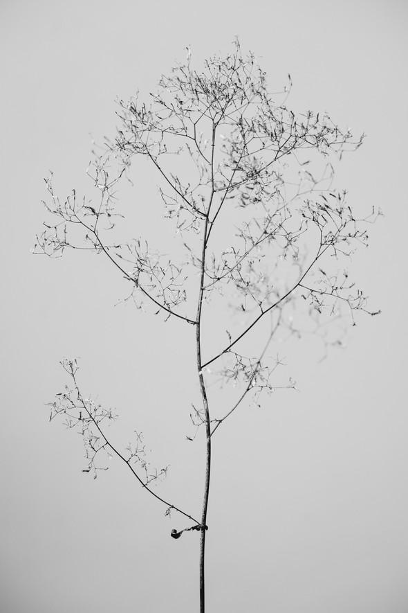 Flora II