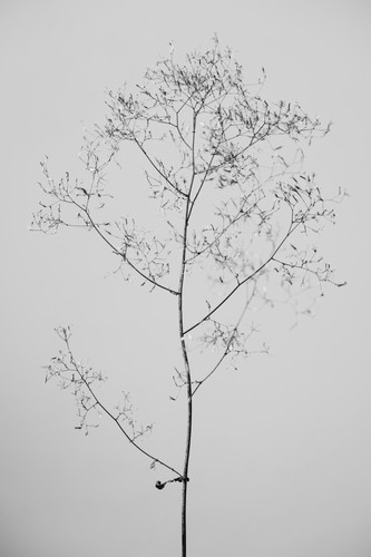 flora_03.jpg