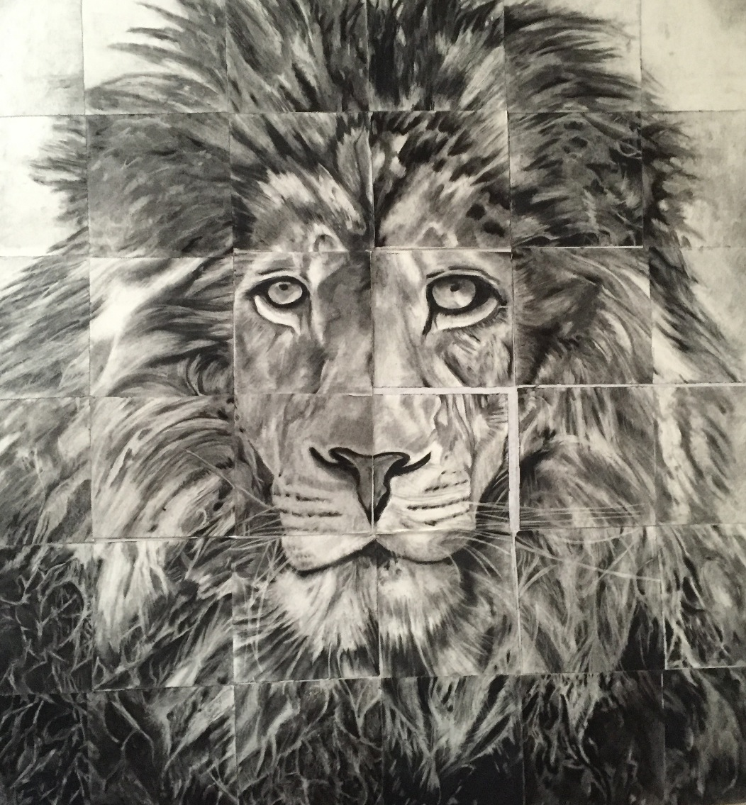 Lion_3x3 charcoal drawing by Nichelle Galloway