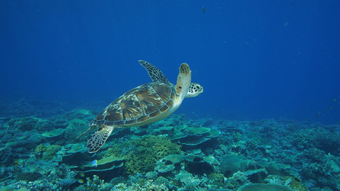 Snorkelling the reef