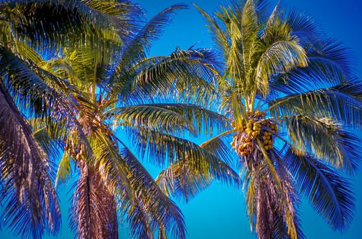 surf-getaways-vanuatu-palm.jpg.jpg