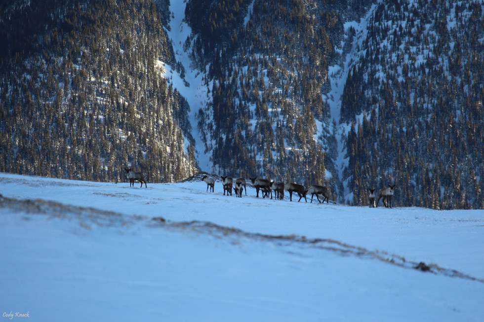 Mountain Herd