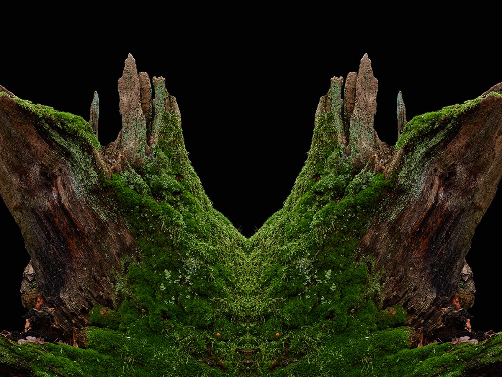 Wald-27