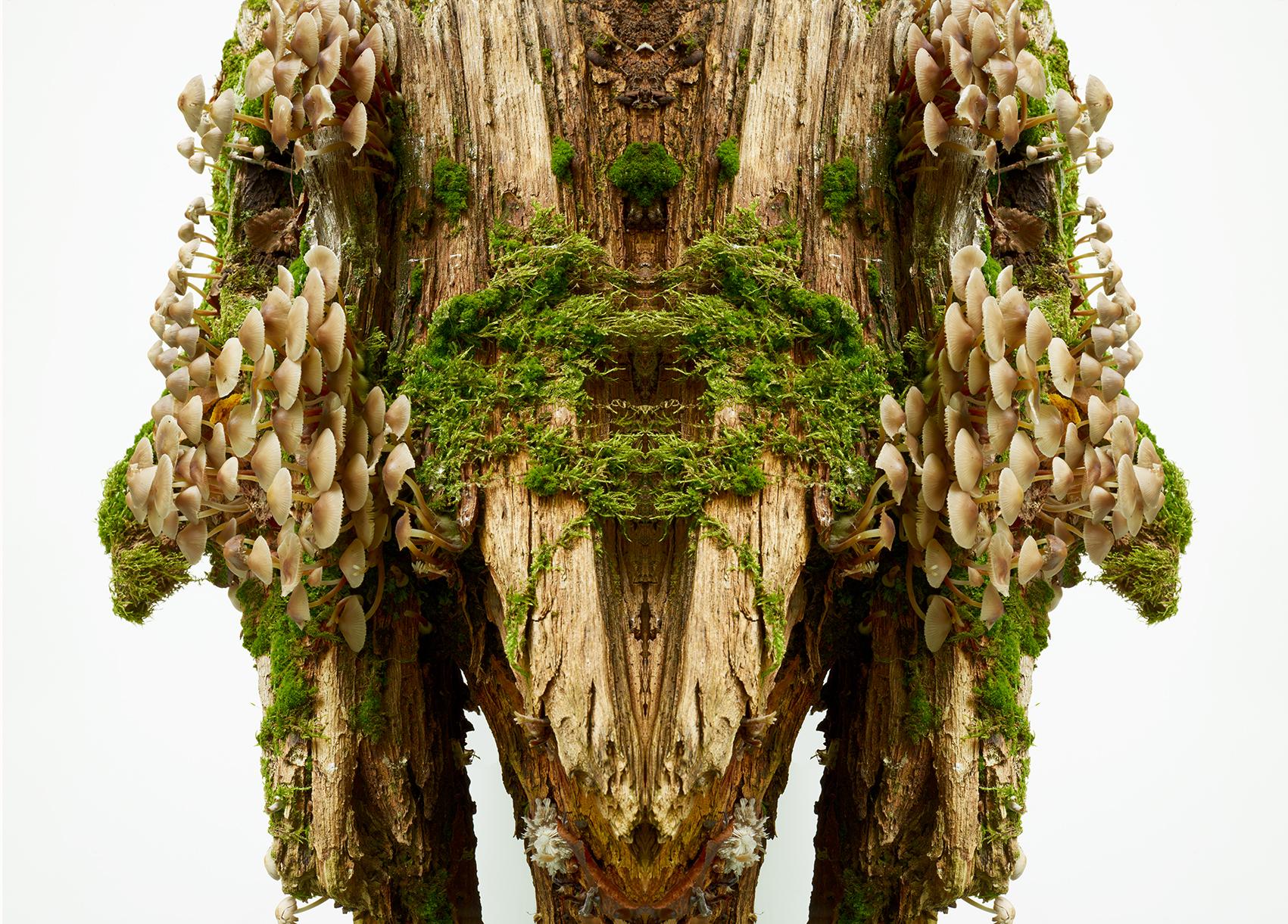 Wald-10