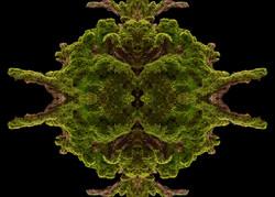 Wald-17