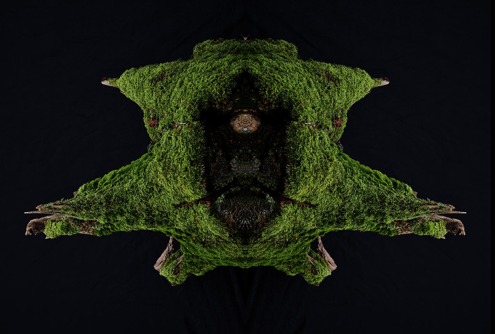 Wald-12