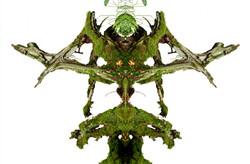 Wald-8