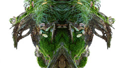 Wald-1