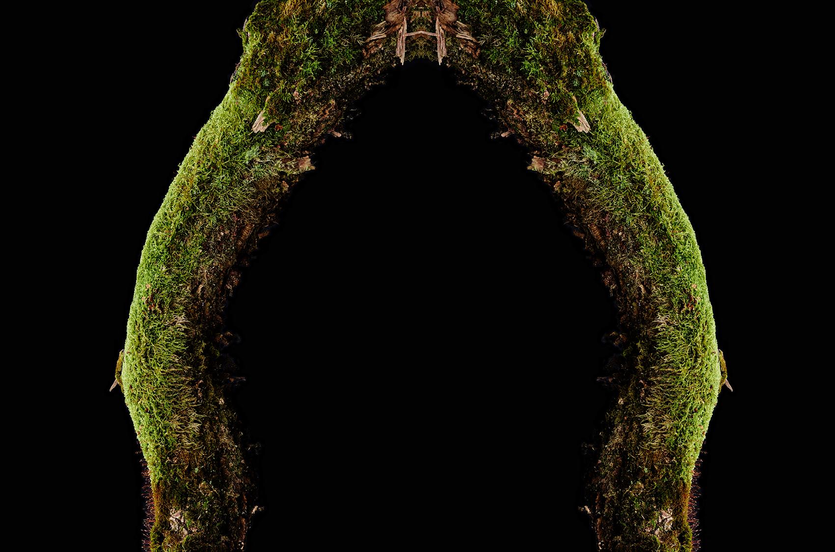 Wald-15