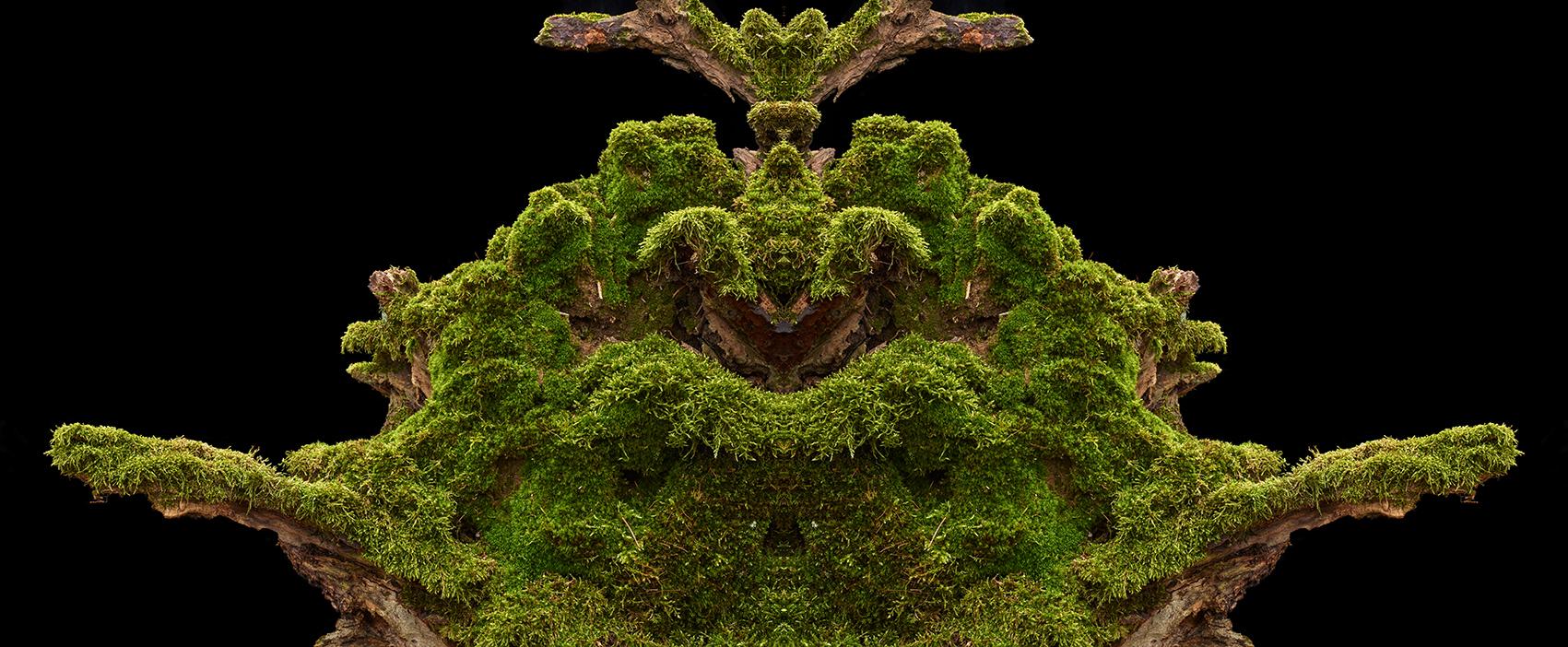 Wald-20