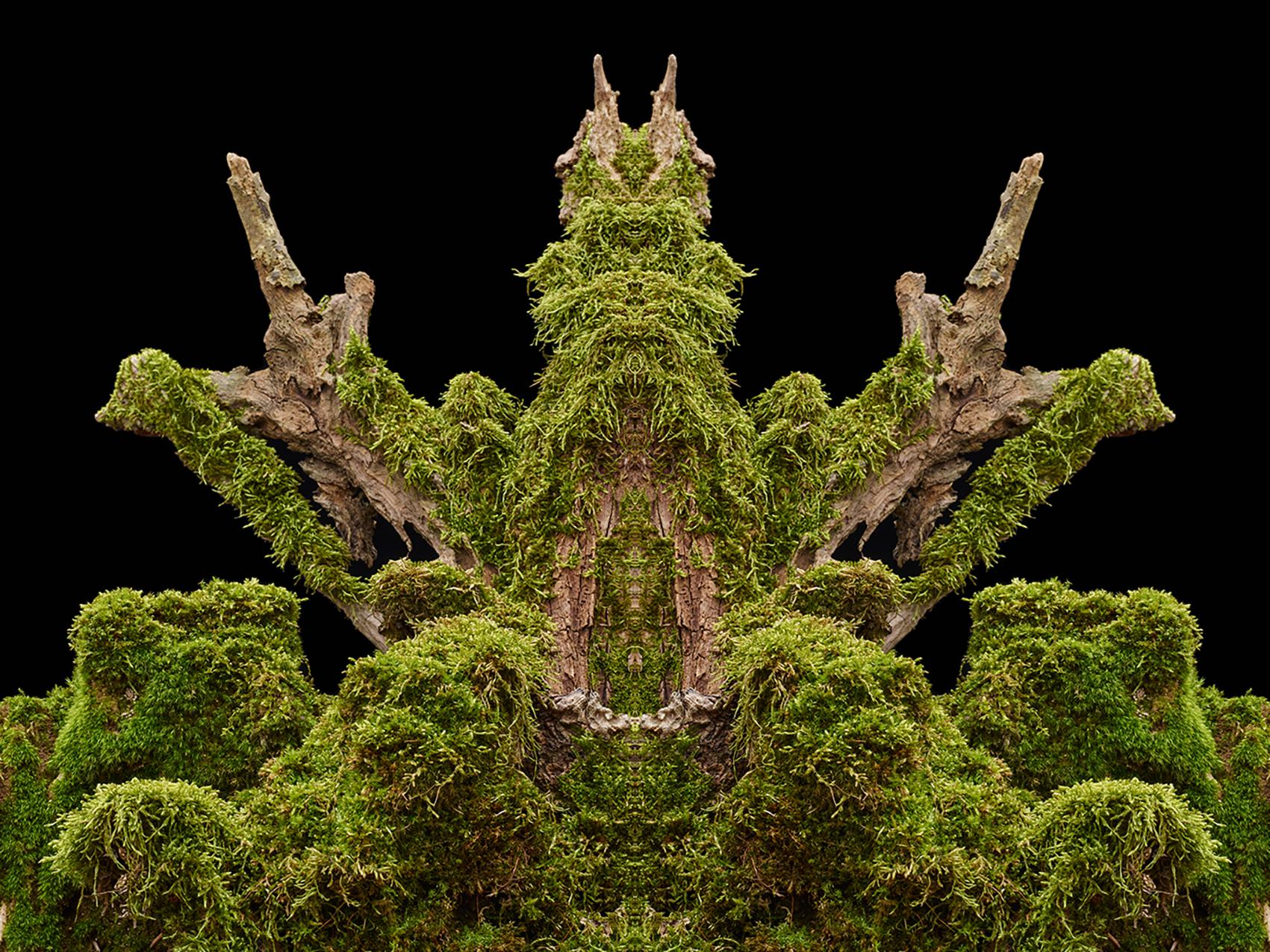 Wald-23