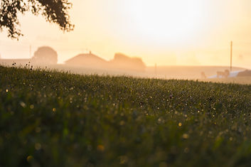 rural-1696661_1920.jpg