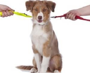 Custody Battles of Pets Coming to Illinois