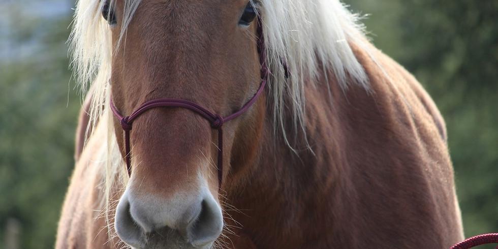 FREE EVENT - Discover Holistic Horsemanship