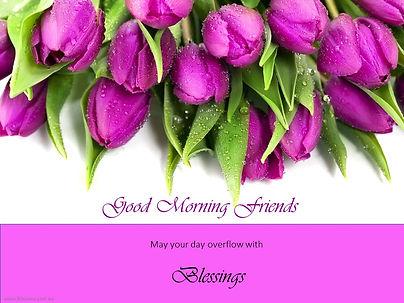 Good Morning Message purple Tulips