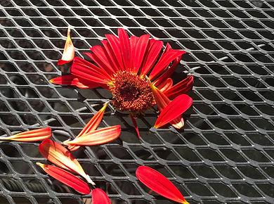 iron flower 2.jpg